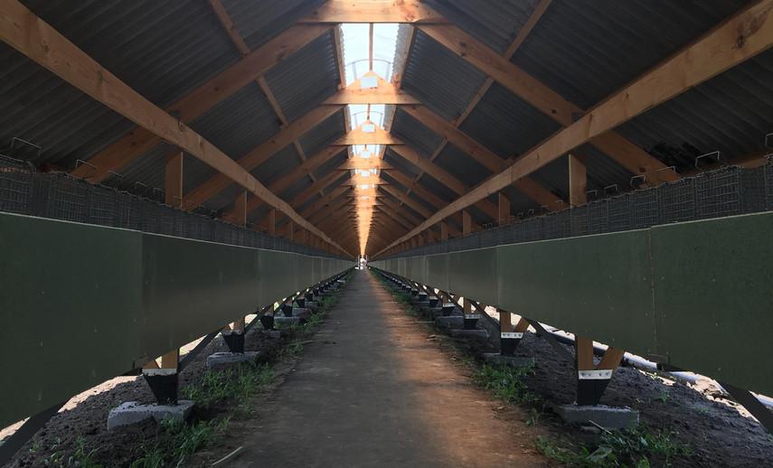 Датский инвестор построит в Украине норковую ферму