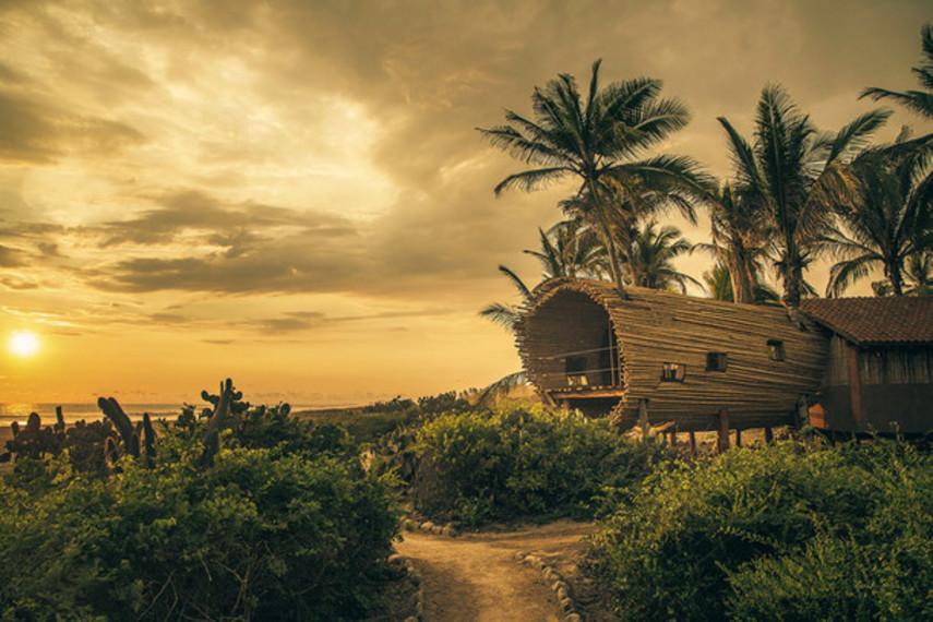 Домик на дереве на берегу Тихого океана (Фото)