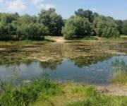 Жители Подольского района просят расчистить озера
