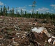 Киевсовет запретил санитарную вырубку лесов