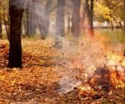 Киевлян предупредили о штрафах за сжигание листьев и мусора