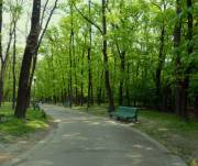 На 34 гектарах в парке «Голосеевский» незаконно размещена торговля и рестораны