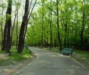 Еще 18 новых зеленых зон появится в столице