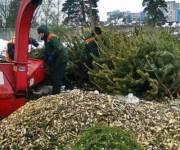 В столице заработали пункты сбора елок