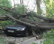 В Киеве проверят все деревья и выявят опасные