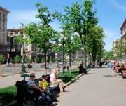 Киевляне проголосовали за дерево, которое хотят видеть на Крещатике вместо каштанов