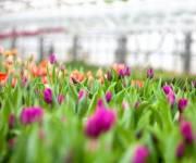 В столице высадят миллионы цветов и тысячи деревьев в этом году