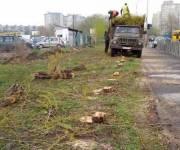 Неизвестные спилили 55 тополей в Дарницком районе