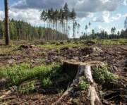 Предпринимателя, который вырубил почти 2 тысячи деревьев в Быковне, будут судить