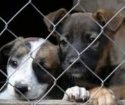 Утвердили проект Центра защиты животных