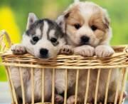 Киевлянам рассказали, как работает Реестр домашних животных