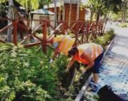 Коммунальщики сообщили, как борются с амброзией