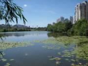 На озере Лебединое построят систему аэрации