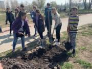 Киевлянам бесплатно раздадут саженцы деревьев