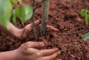 В Киеве высадят тысячу деревьев и создадут эко-хаб