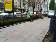 На бульваре Леси Украинки появилась живая изгородь