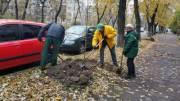 Возле отремонтированных дорог в Киеве будут высаживать деревья