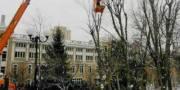 В Киеве будут массово обрезать деревья