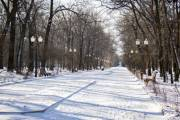 В октябре представят Программу развития зеленых зон Киева