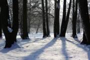 Парк «Голосеевский» увеличат почти на 2000 гектаров