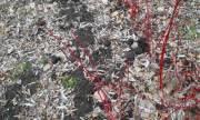 В Киеве украли кусты с проспекта Вернадского