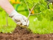 В Киеве высадят 100 тысяч деревьев за год