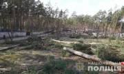Полиция Киевщины расследует факт незаконной вырубки 60 сосен