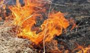 Киевлян будут штрафовать за сжигание сухой травы (размер штрафов)
