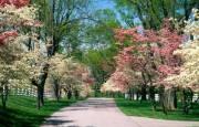 В каждом районе Киева появится по новому парку (адреса)