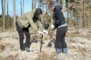 Из-за вируса, в Киеве не будет массовой высадки деревьев