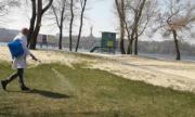 В Деснянском районе парки просят не посещать из-за обработки деревьев от клещей