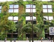 В Киеве бесплатно раздадут саженцы для вертикального озеленения домов
