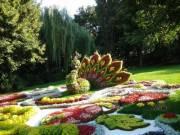 На Певчем поле появилось цветочное сафари