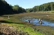 Киев может остаться без озера в Голосеевском районе