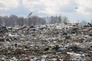 Киевлян оштрафовали за не убранный мусор на полмиллиона гривен