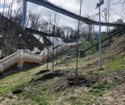 Штрафы за вырубку деревьев в городах существенно вырастут