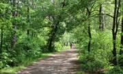 Киевляне просят отремонтировать «Тропу здоровья» в парке Партизанской славы